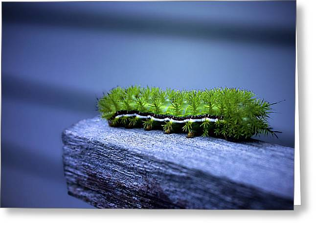 Catapillars Greeting Cards - Which Way to Go? Greeting Card by Trish Mistric