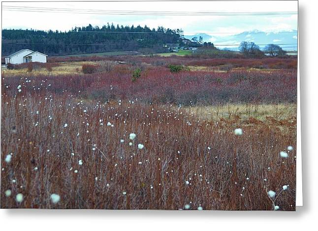 Whidbey Island Wa Greeting Cards - Whidbey island  Greeting Card by Shannon Lee