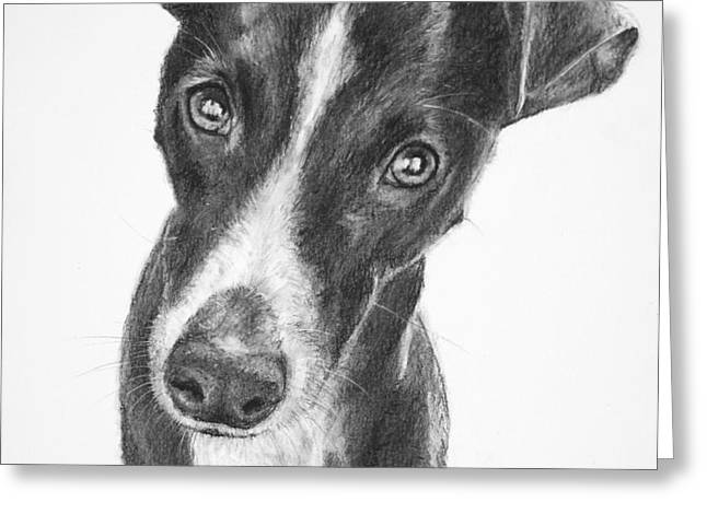 Whippet Black and White Greeting Card by Kate Sumners