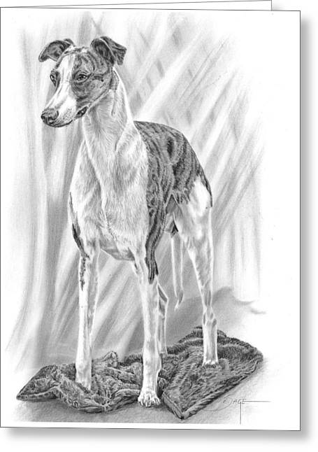 Painted Puppies Drawings Greeting Cards - Whippet Greeting Card by Elizabeth Sage