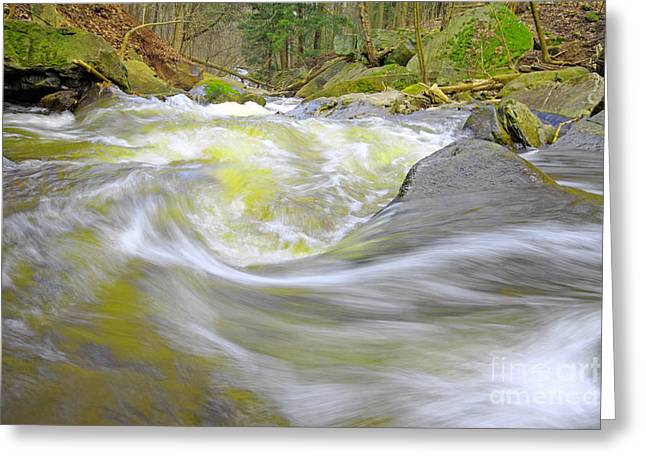 Escarpment Greeting Cards - Whirlpool in Forest Greeting Card by Charline Xia