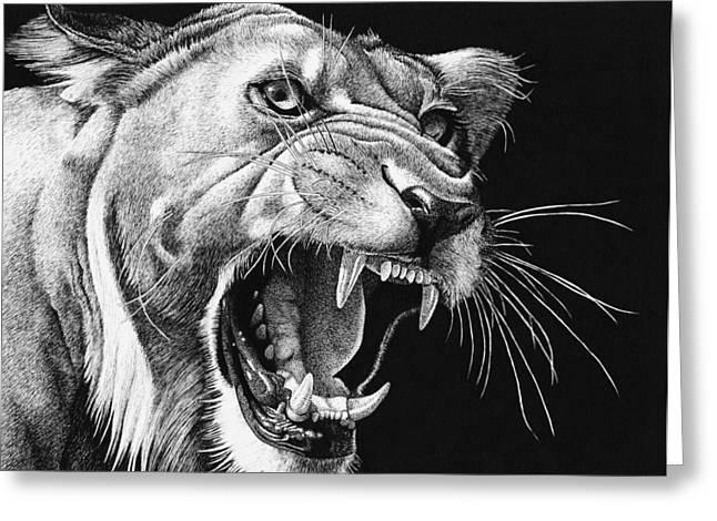 Lioness Drawings Greeting Cards - Whiskers and Teeth Greeting Card by Ron Monroe