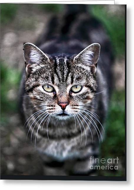 Kat Greeting Cards - Whiskers Greeting Card by John Rizzuto