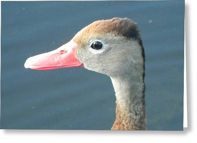 Animal Art Posters In Mixed Media Greeting Cards - Whisling Duck Greeting Card by Gunter  Hortz