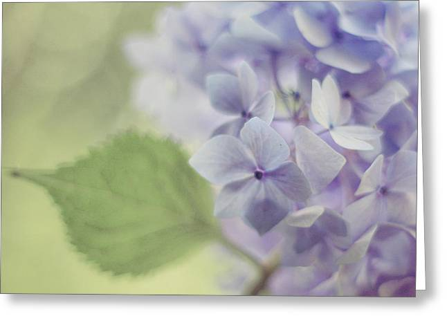 Lavendar Greeting Cards - Whisper Greeting Card by Amy Tyler