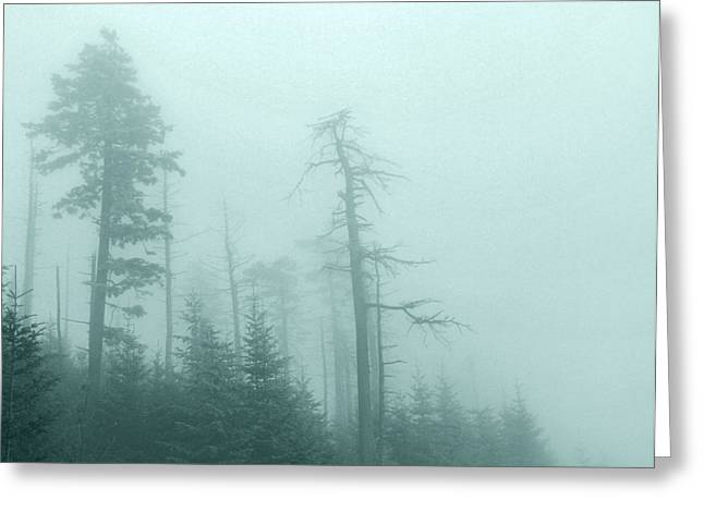 Misty Pine Photography Greeting Cards - Whisper In The Woods Greeting Card by Dan Sproul