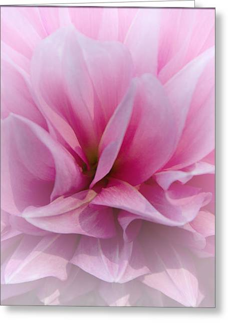 Color_image Greeting Cards - Whisper Love Greeting Card by Jean OKeeffe Macro Abundance Art