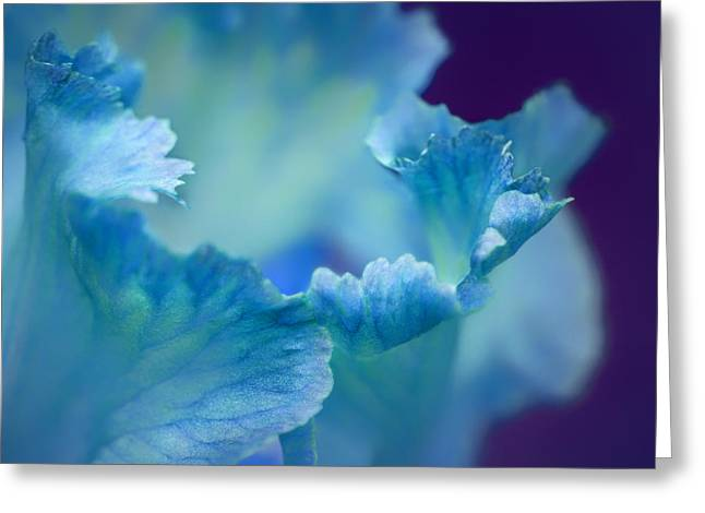 Close Focus Floral Greeting Cards - Whispering Greeting Card by Nikolyn McDonald