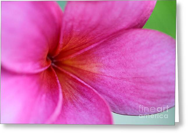 Whispering Pink Plumeria Greeting Card by Sabrina L Ryan