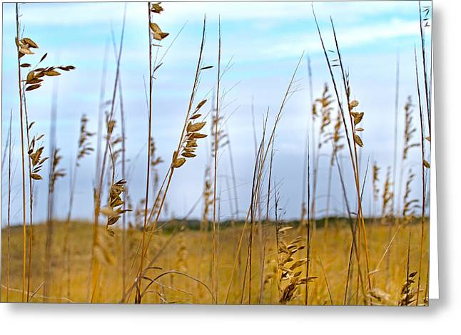 Sea Oats Greeting Cards - Whispering Sea Oats  Greeting Card by Betsy A  Cutler