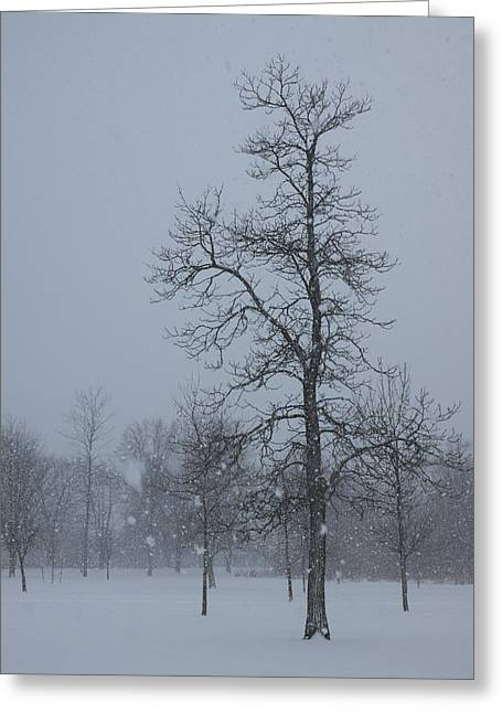 Snow-covered Landscape Greeting Cards - Whispering Snowflakes Greeting Card by Georgia Mizuleva
