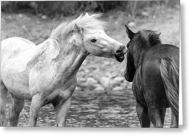 White Stallion Greeting Cards - Whispering Sweet Nothings Greeting Card by Saija  Lehtonen