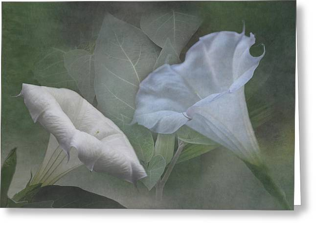 Datura Greeting Cards - Whispers of Angel Trumpet Datura Greeting Card by Angie Vogel