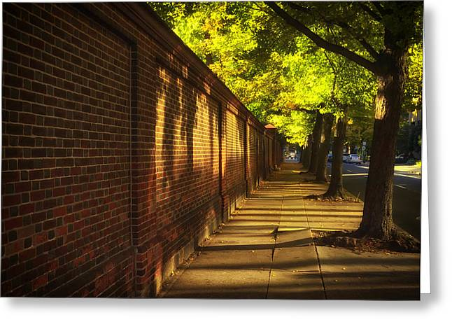 Shady Street Greeting Cards - Whispers of Summer Greeting Card by Mountain Dreams