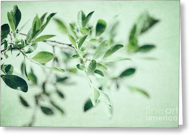 Green Foliage Greeting Cards - Whispers Greeting Card by Priska Wettstein