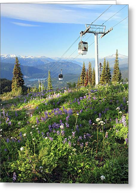 Whistler Greeting Cards - Whistler summer with alpine flowers Greeting Card by Pierre Leclerc Photography