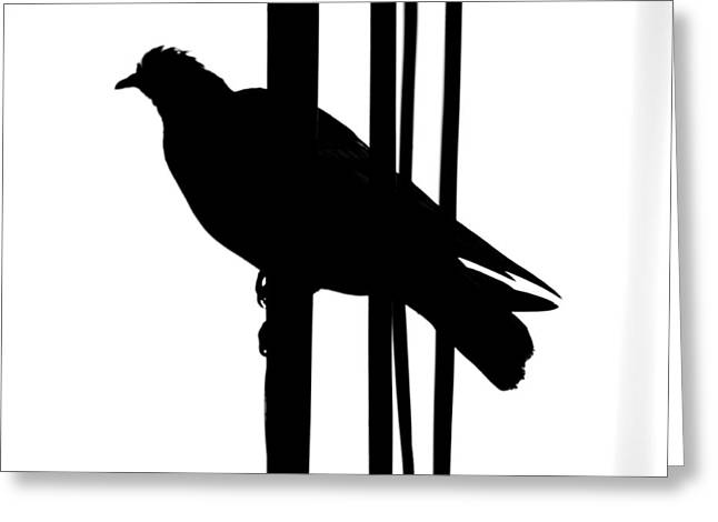 Bird On A Wire Greeting Cards - Whistles Two Warn Greeting Card by Jerry Cordeiro