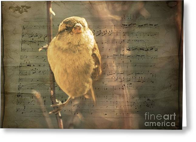 Whistling Song Sparrow Greeting Card by Janice Rae Pariza