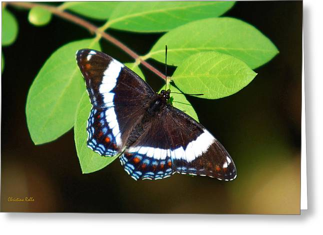 White Admiral Butterfly Greeting Card by Christina Rollo