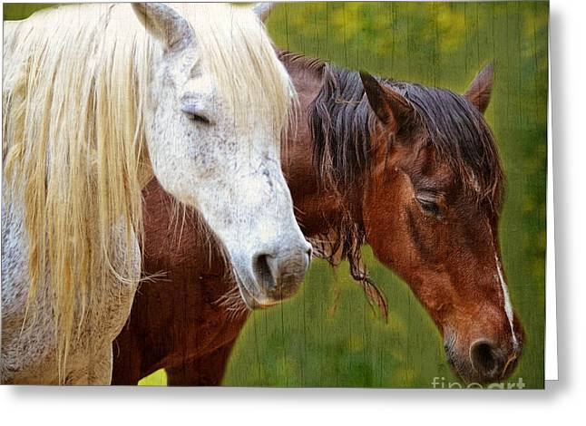 Whiteoaks Photography Greeting Cards - White and Brown Horse Greeting Card by Eva Thomas