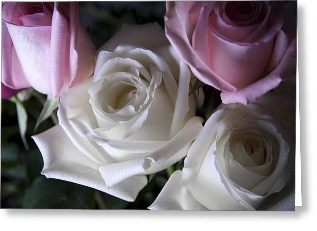 White Flower Photographs Greeting Cards - White and pink roses Greeting Card by Jennifer Lyon