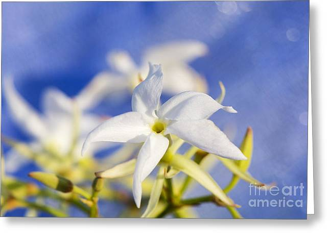 Sweetly Greeting Cards - White and Pure Greeting Card by Moira Rowe