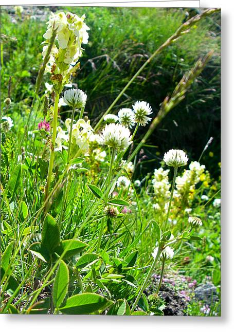 Geobob Greeting Cards - White and Purple Alpine Flowers in Meadows in the Alps of Switzerland Greeting Card by Robert Ford