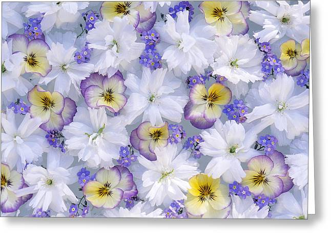 White And Purple Flowers Greeting Card by Jan Vermeer