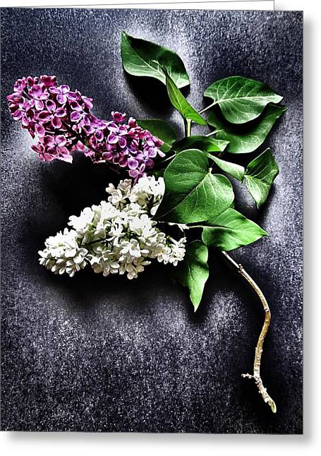 Floral Structure Greeting Cards - White and Purple Lilacs Greeting Card by Marianna Mills