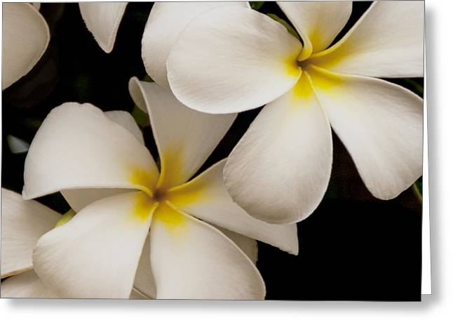 The Flower Of Life Greeting Cards - White And Yellow Plumeria - Kauai Hawaii Greeting Card by Brian Harig