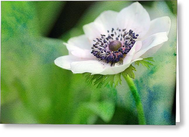Flower Center Greeting Cards - White Anemone Greeting Card by Rebecca Cozart