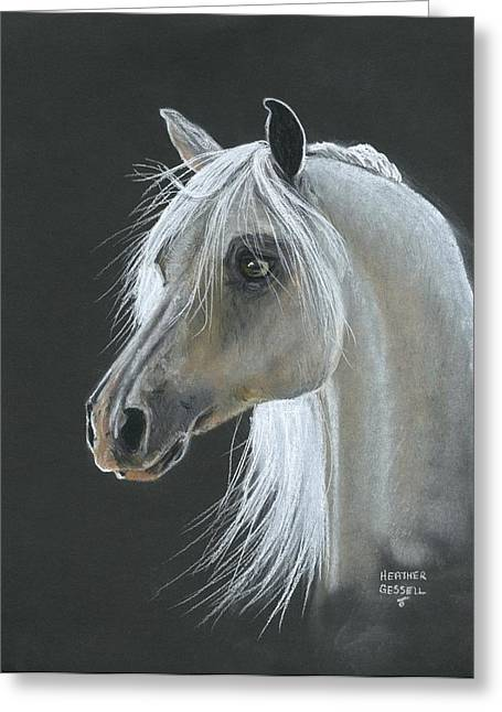 Backlit Pastels Greeting Cards - White Arabian Greeting Card by Heather Gessell