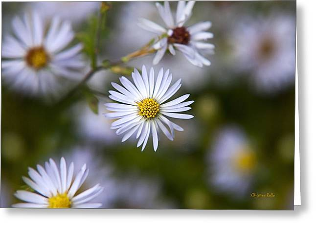 White Aster Flower Greeting Card by Christina Rollo