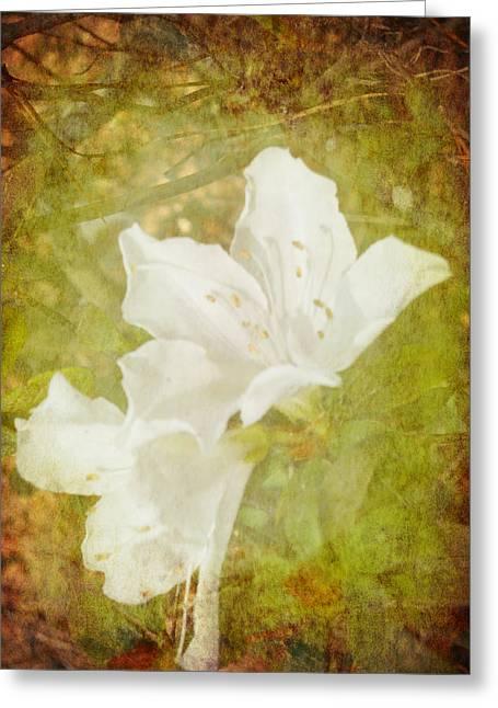 Judy Hall-folde Greeting Cards - White Azalea Greeting Card by Judy Hall-Folde
