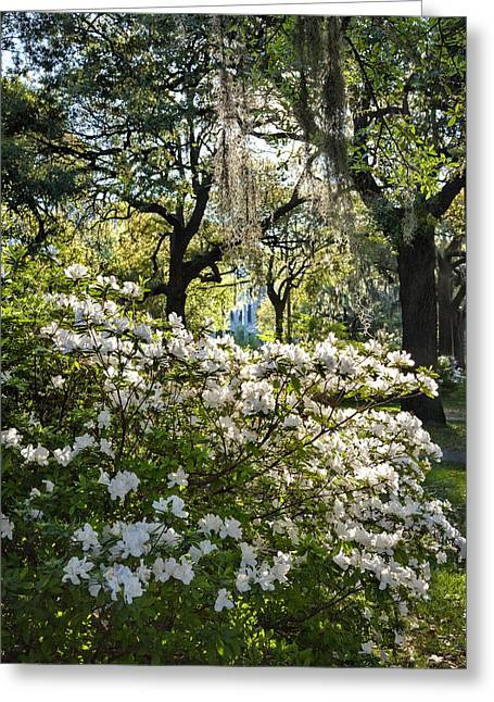 Juliette Low Greeting Cards - White Azaleas Greeting Card by Diana Powell