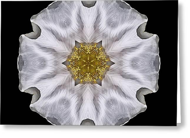 David J Bookbinder Greeting Cards - White Beach Rose I Flower Mandala Greeting Card by David J Bookbinder
