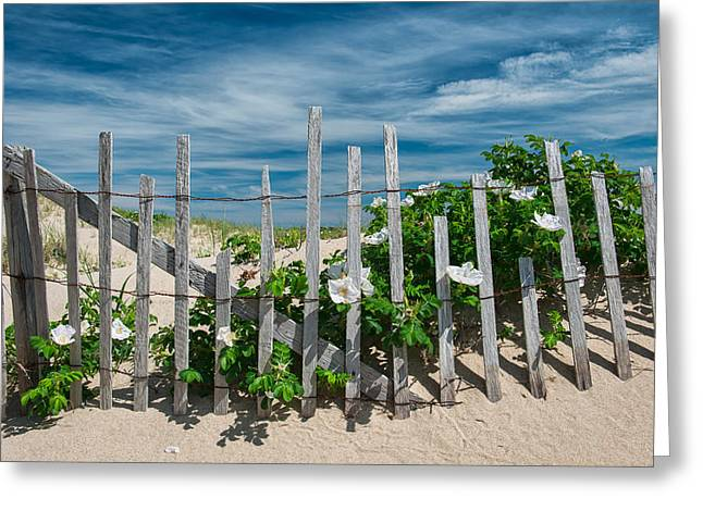 Sand Fences Greeting Cards - White Beach Roses Greeting Card by Michael Blanchette