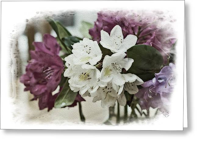 Rhodendron Greeting Cards - White Beauty Greeting Card by Anita Hubbard