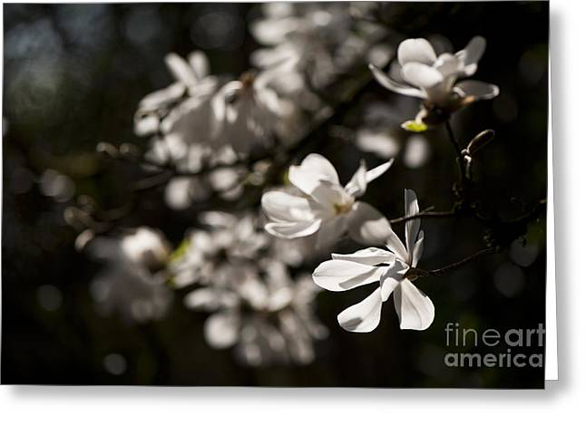 White Beauty Greeting Card by Anne Gilbert