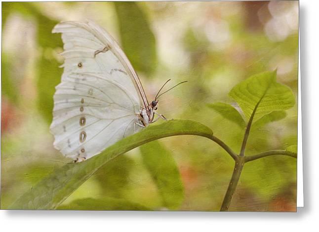 Pompano Greeting Cards - White Beauty Greeting Card by Kim Hojnacki