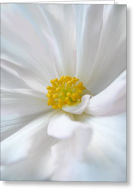 Begonias Greeting Cards - White Begonia Flower Macro Greeting Card by Jennie Marie Schell