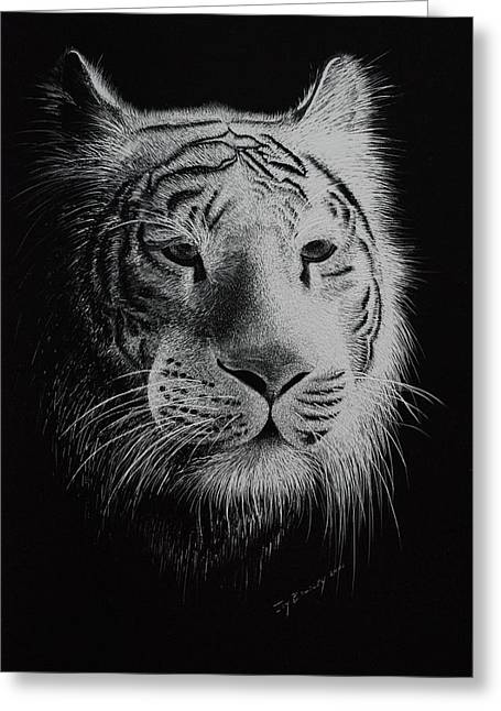 Bengal Drawings Greeting Cards - White Bengal Tiger Greeting Card by Joy Bradley