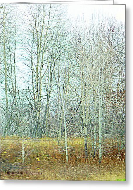 Quite Digital Art Greeting Cards - White Birch Along The CSX Railroad II Greeting Card by Rosemarie E Seppala