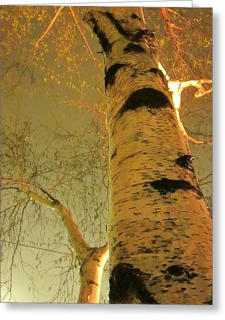 Guy Ricketts Photography Greeting Cards - White Birch Stood Still Greeting Card by Guy Ricketts