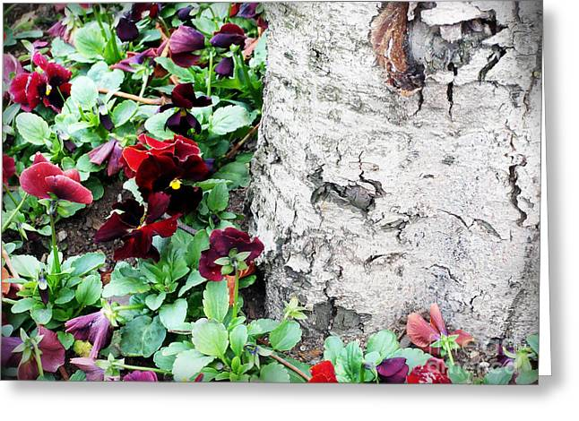 White Pyrography Greeting Cards - White birch tree trunk and pansies Greeting Card by Ioana Ciurariu
