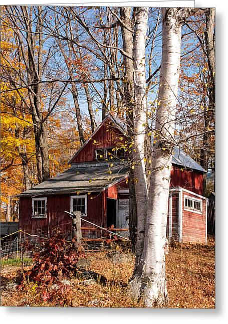 Geobob Greeting Cards - White Birches and Red Farmhouse Marlboro Vermont Greeting Card by Robert Ford