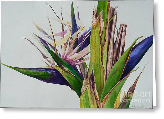 Family Of Doctors Greeting Cards - White Bird of Paradise Tree Greeting Card by Susan Duda