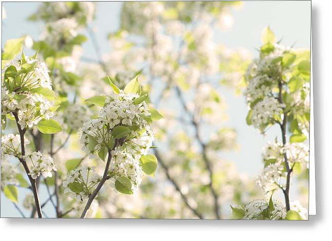 White Blossoms Greeting Card by Diane Miller