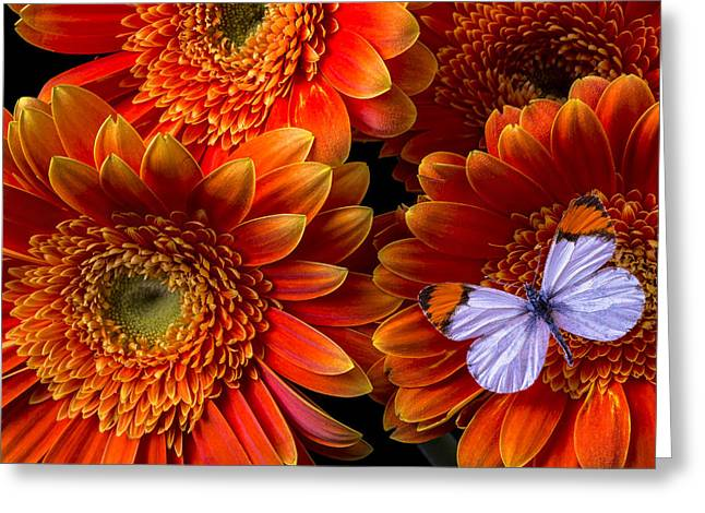 White Daises Greeting Cards - White butterfly and daisys Greeting Card by Garry Gay