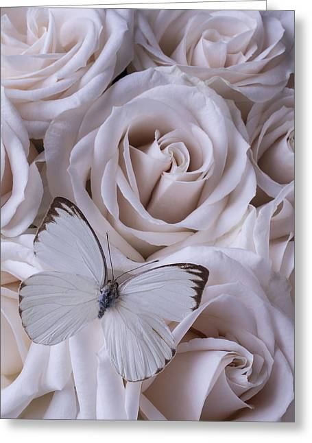 White Butterfly Greeting Cards - White Butterfly Greeting Card by Garry Gay